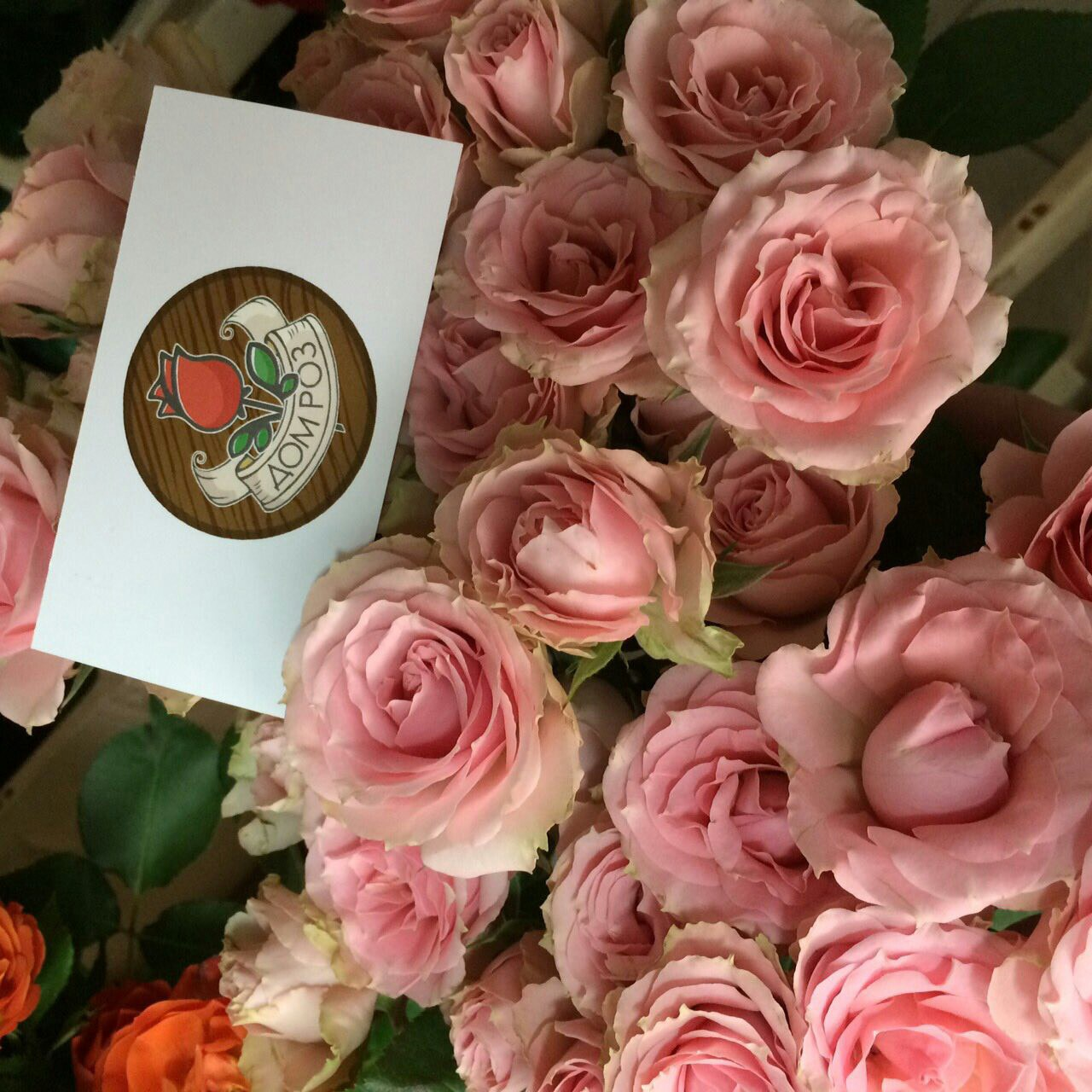 Цветов квартиры, доставка цветов в витебске