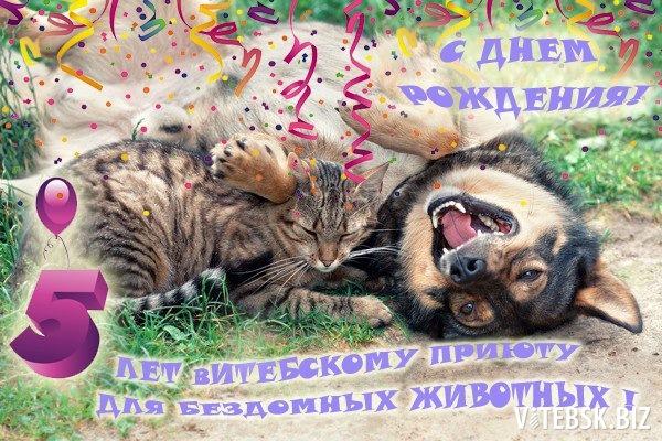 Открытки с днем рождения волонтеру по животным