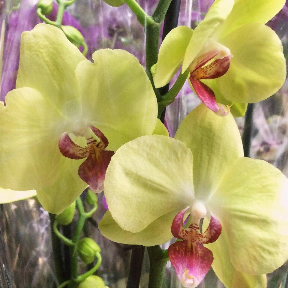 эту садовые цветы похожие на орхидеи фото приготовления